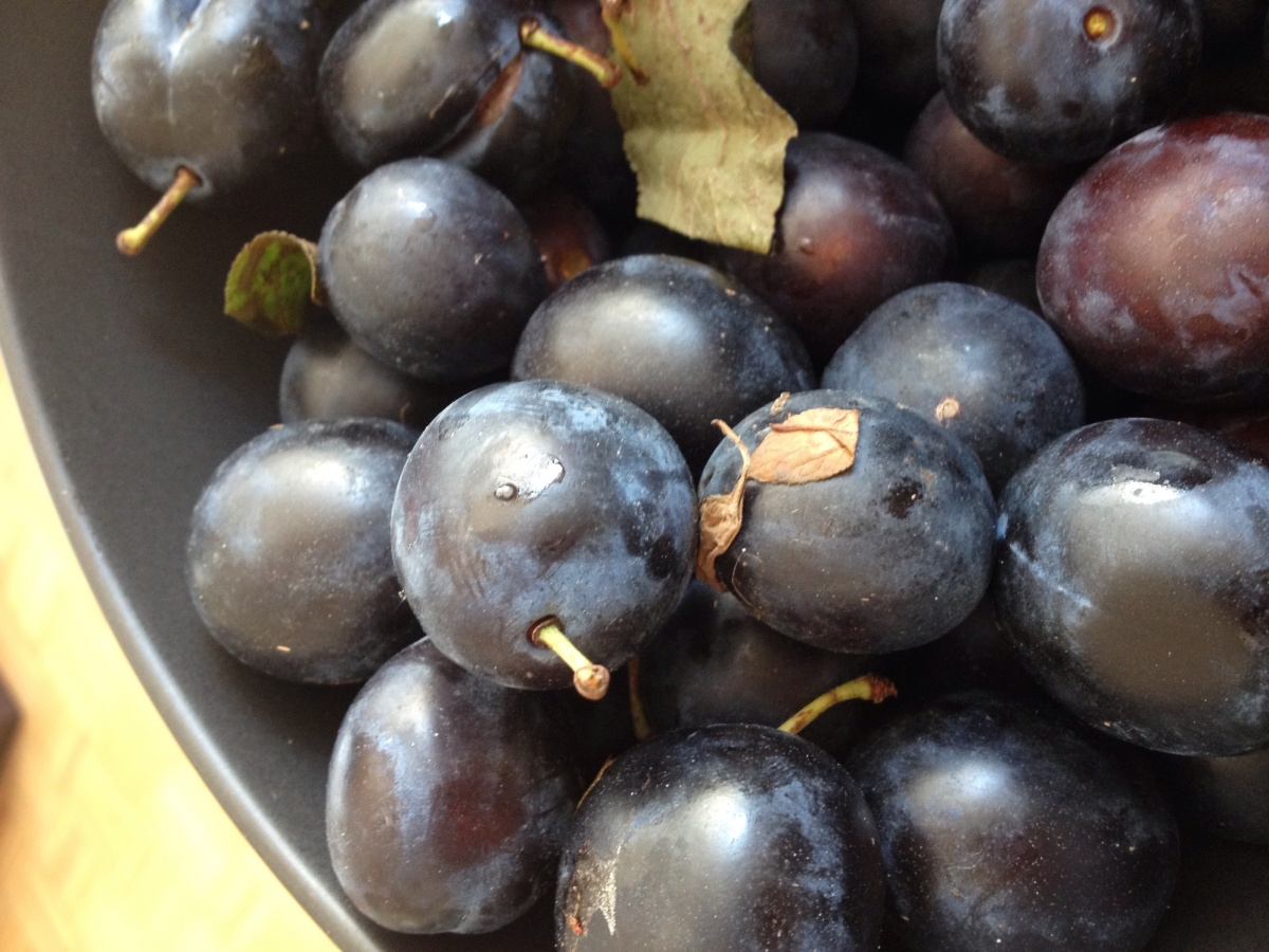 DAMSONS IN GIN FOR CHRISTMAS